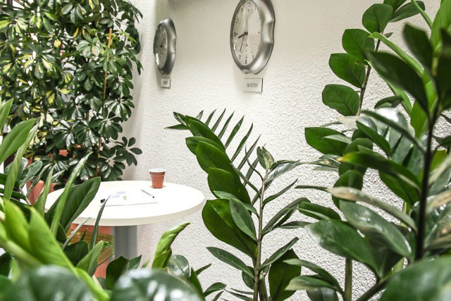 location plantes au bureau