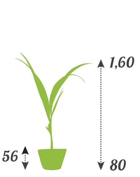tarifs location plantes prix mini