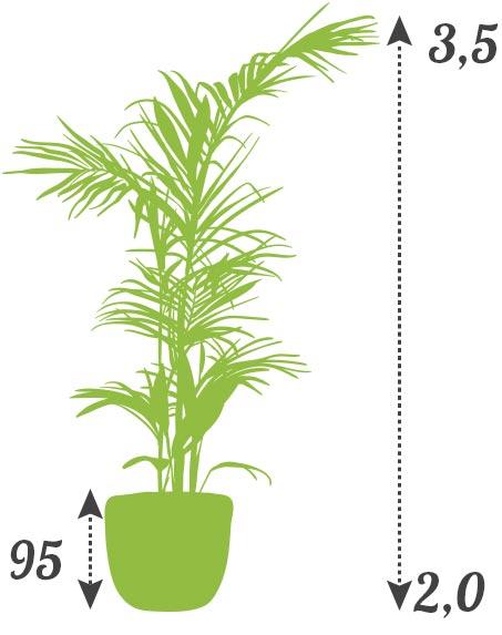 tarifs location plantes prix supérieur