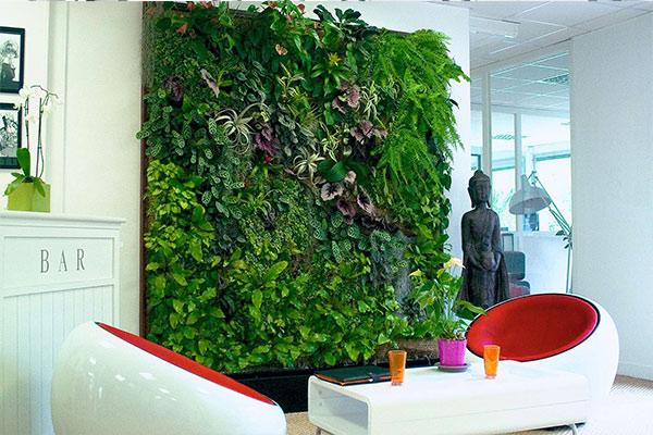 tarifs location plantes prix mur vegetal