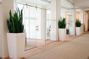 Offres location plantes vertes bureaux bac blanc couloir entree