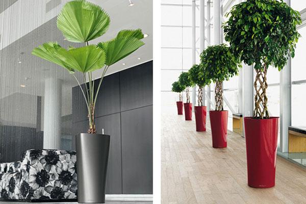 offres location plantes vertes et bac design nature au bureau