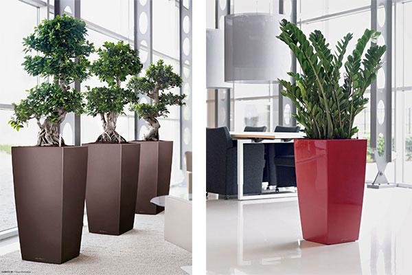 offres location plantes vertes bureaux bac design cubico votre paysagiste de bureau. Black Bedroom Furniture Sets. Home Design Ideas