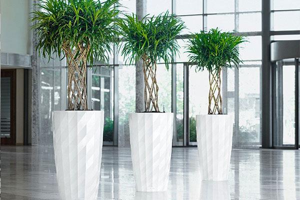 offres location plantes vertes bureaux bac entree votre paysagiste de bureau. Black Bedroom Furniture Sets. Home Design Ideas