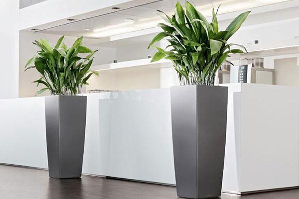 offres location plantes vertes bureaux bac gris accueil votre paysagiste de bureau. Black Bedroom Furniture Sets. Home Design Ideas