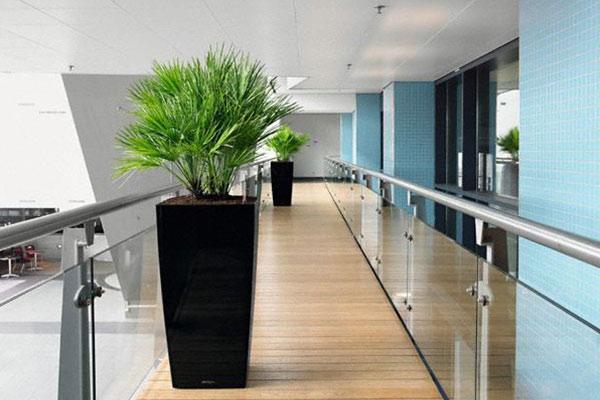 offres location plantes vertes bureaux bac noir couloir votre paysagiste de bureau. Black Bedroom Furniture Sets. Home Design Ideas