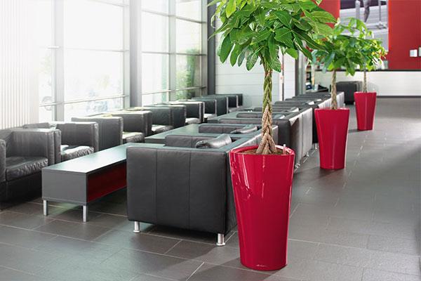 offres location plantes vertes bureaux bac rouge design votre paysagiste de bureau. Black Bedroom Furniture Sets. Home Design Ideas
