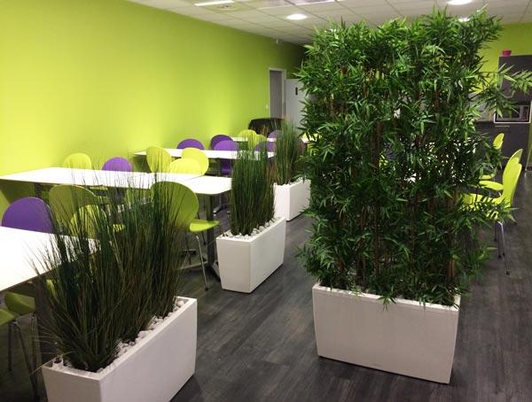 services de location de plantes des offres sur mesure
