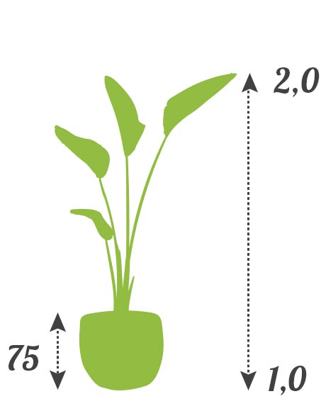 tarifs location plantes prix moyen