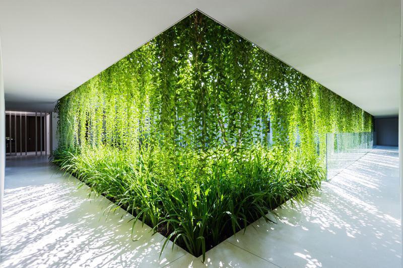 bien-être et plantes au bureau : faites entrer la nature dans vos locaux